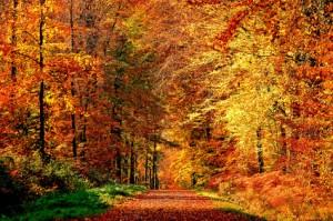 Sortez dans la nature pour profiter de ce bel automne